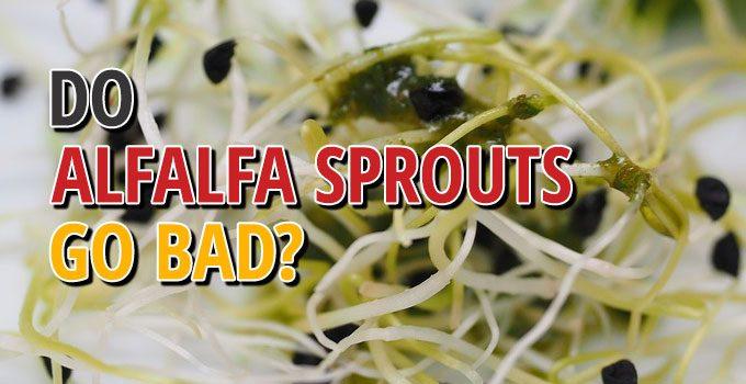 Do Alfalfa Sprouts Go Bad
