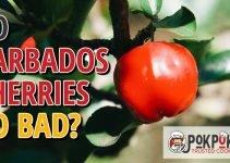 Do Barbados Cherries Go Bad