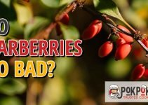 Do Barberries Go Bad