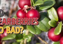 Do Bearberry Go Bad