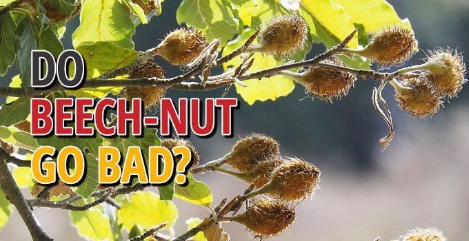 Do Beech Nuts Go Bad