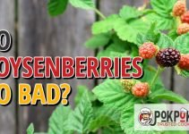 Do Boysenberries Go Bad