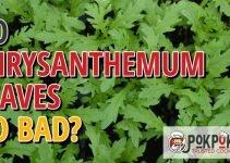 Do Chrysanthemum Leaves Go Bad