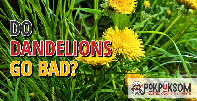 Do Dandelions Go Bad