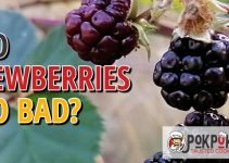 Do Dewberries Go Bad
