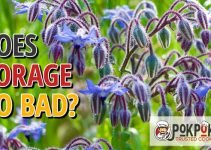 Does Borage Go Bad