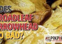Does Broadleaf Arrowhead Go Bad?