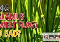 Does Calamus (sweet Flag) Go Bad