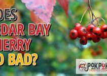 Does Cedar Bay Cherry Go Bad