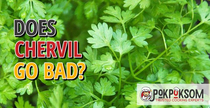 Does Chervil Go Bad