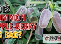 Does Common Apple Berry Go Bad