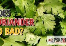 Does Coriander Go Bad?