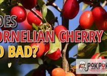 Does Cornelian Cherry Go Bad