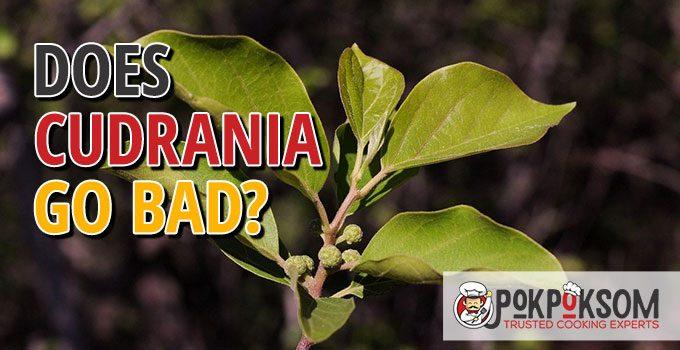 Does Cudrania Go Bad