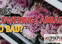 Does Flowering Cabbage Go Bad