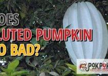 Does Fluted Pumpkin Go Bad?