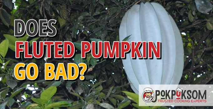 Does Fluted Pumpkin Go Bad
