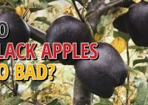 Do Black Apples Go Bad