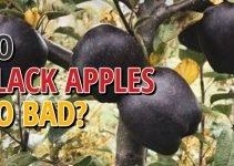 Does Black Apple Go Bad?