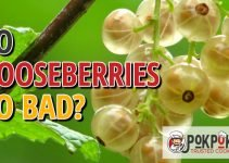 Do Gooseberries Go Bad