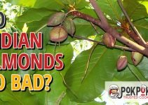 Do Indian Almonds Go Bad