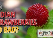 Do Indian Strawberries Go Bad