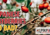 Do Japanese Bayberries Go Bad