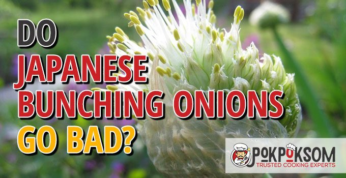 Do Japanese Bunching Onions Go Bad