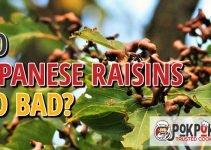 Do Japanese Raisins Go Bad