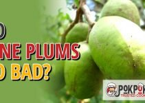 Do June Plums Go Bad