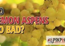 Does Lemon Aspen Go Bad?
