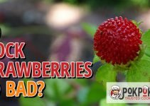Do Mock Strawberries Go Bad