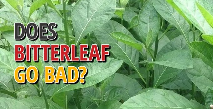 Does Bitterleaf Go Bad