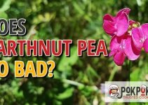 Does Earthnut Pea Go Bad