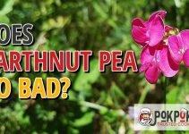 Does Earthnut Pea Go Bad?