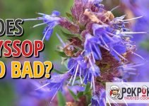 Does Hyssop Go Bad