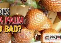 Does Ita Palm Go Bad