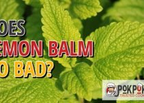 Does Lemon Balm Go Bad
