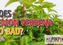 Does Lemon Verbena Go Bad
