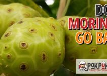 Does Morinda Go Bad