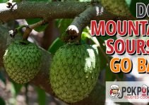 Does Mountain Soursop Go Bad?