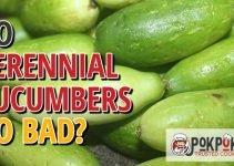Do Perennial Cucumbers Go Bad?
