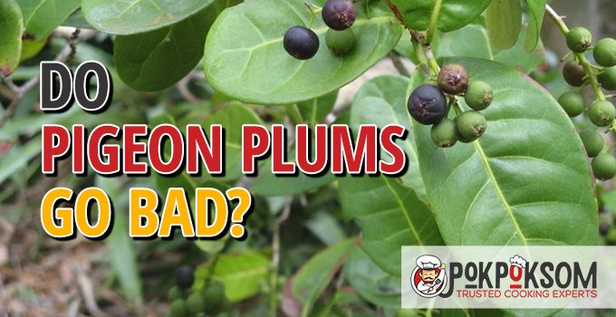 Do Pigeon Plums Go Bad