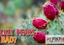 Do Prickly Pears Go Bad?