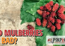 Do Red Mulberries Go Bad?