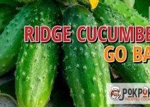Do Ridge Cucumbers Go Bad?