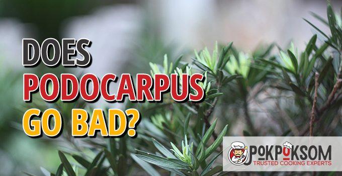 Does Podocarpus Go Bad