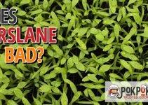 Does Purslane Go Bad?