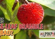 Does Rose-Leaf Bramble Go Bad?