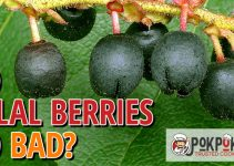 Do Salal Berries Go Bad?
